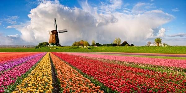 Hà Lan xứ sở hoa Tuylip