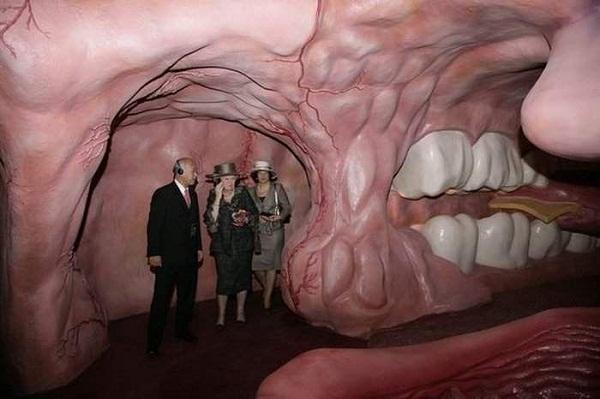 Bảo tàng cơ thể người thú vị ở Hà Lan