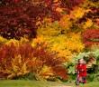 Ngây ngất trước vẻ đẹp mùa thu ở Anh