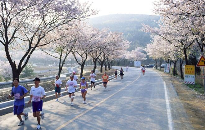 le hoi hoa anh dao Gyeongju