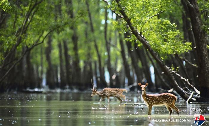 rung Sundarbans