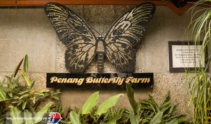 Trang trại bướm Penang