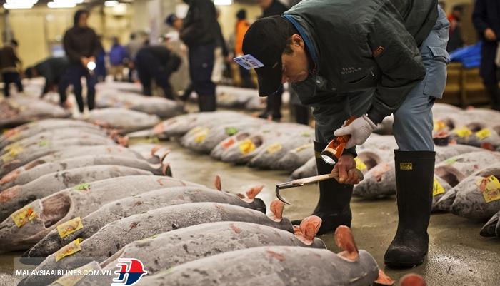 Xem đấu cá ngừ ở chợ cá Tsukiji