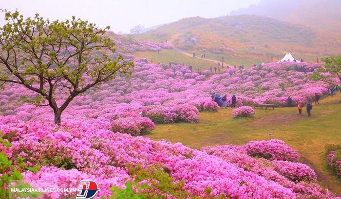 Mùa xuân - mùa hoa Hàn Quốc