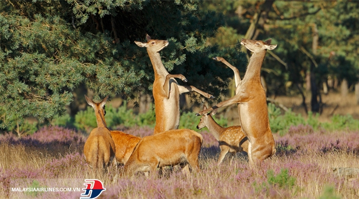 Vườn quốc gia Hoge Veluwe