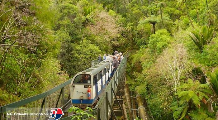 Khám phá rừng mưa nhiệt đới thuộc dãy Waitakere