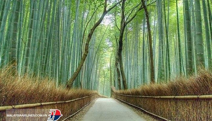 Khu vực Arashiyama - Nhật Bản