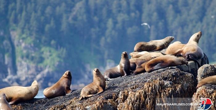 Đến Alaska khám phá thiên nhiên hoang dã